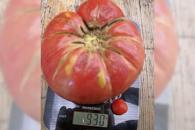 Tomatenzüchten lohnt sich
