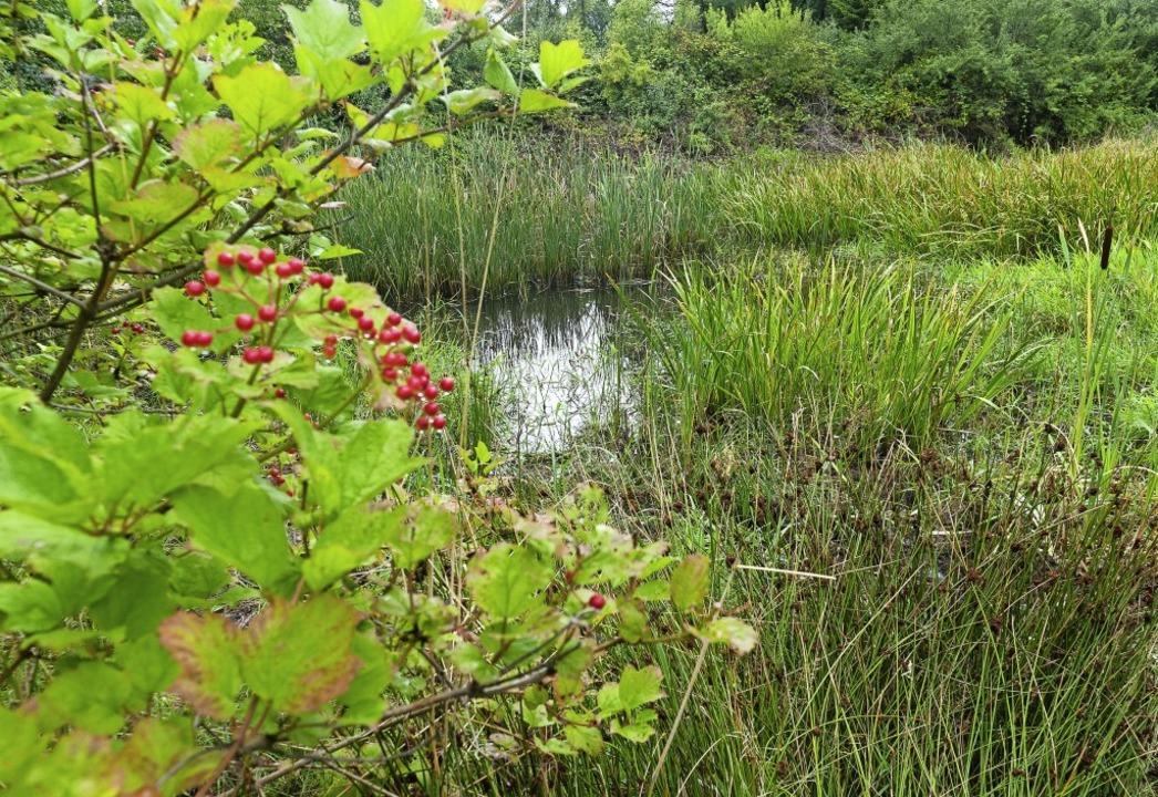 Das Biotop am Klemmbach vor dem Rückha...ein besonderes ökologisches Potenzial.  | Foto: Alexander Huber