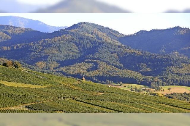 Winzerinnen und Winzer in Ehrenstetten fürchten das Ende des Weinbaus am Ölberg