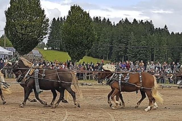 Große Bühne für die Pferde