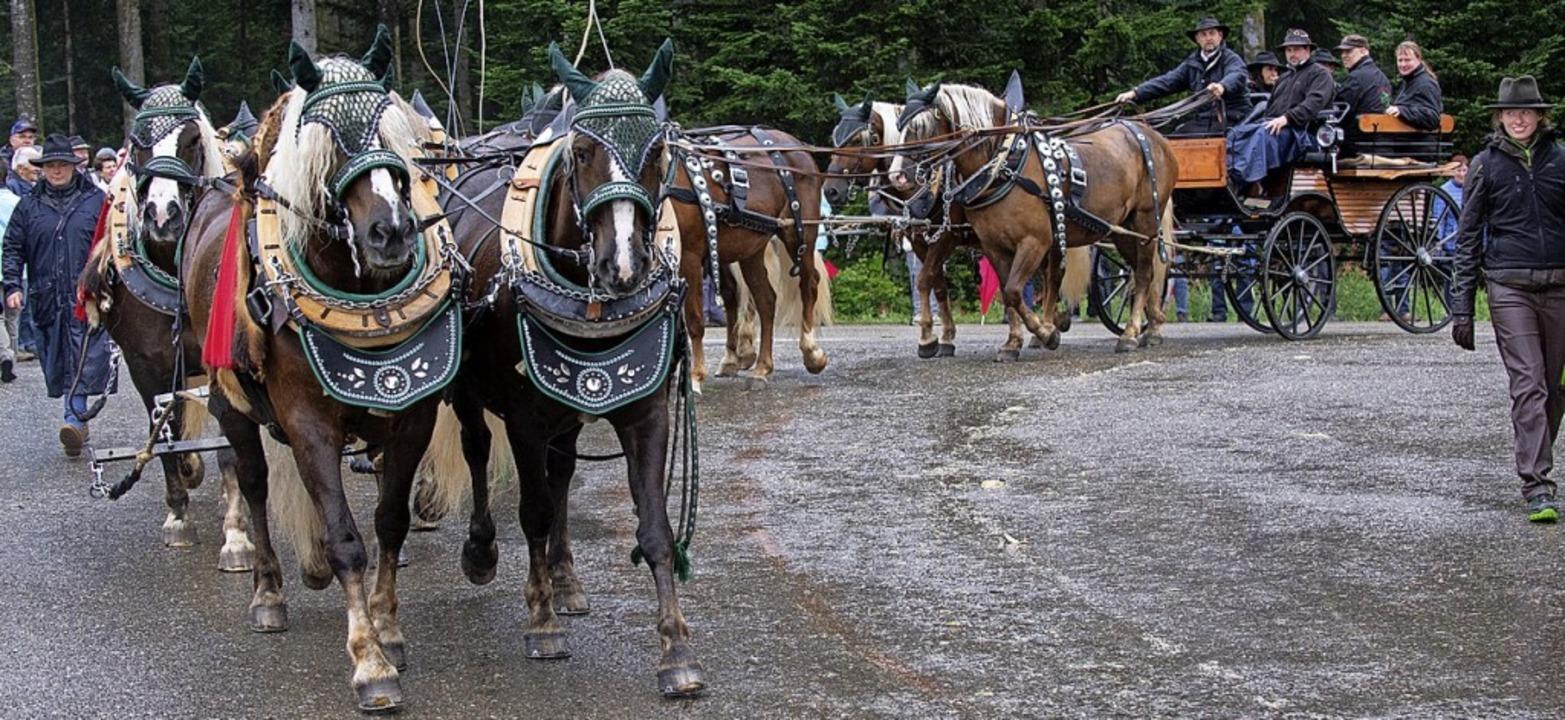 Zehnspänner auf dem Weg zum Festgelände  | Foto: Wolfgang Scheu