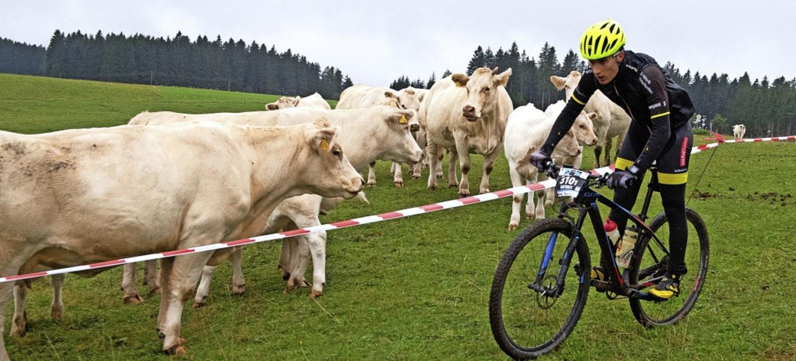 Charolais-Rinder als entspannte Zuscha...ebten die Mountainbiker an der Neueck.  | Foto: Wolfgang Scheu