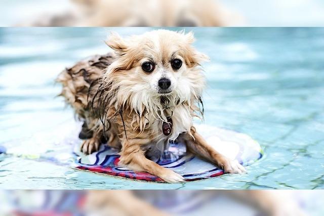 Hundetag im Schwimmbad Lehrte