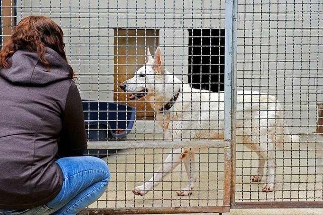 Viele Tierfreunde kommen zum Tierheimfest