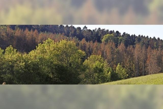 Der Wald gibt ein trauriges Bild ab