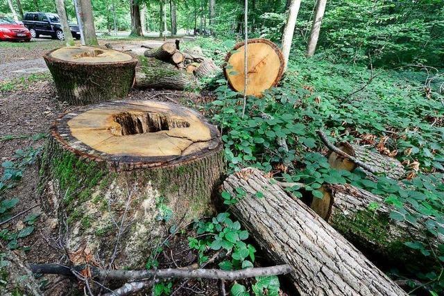 Bürgerverein und Fridays for Future kritisieren Abholzung am Eugen-Keidel-Bad