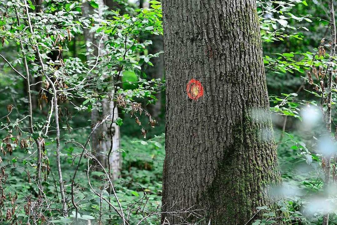 Das Garten- und Tiefbauamt hat Bäume fürs Recycling markiert.  | Foto: Ingo Schneider