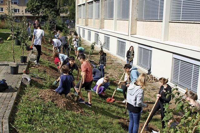Schüler pflanzen 13 Obstbäume