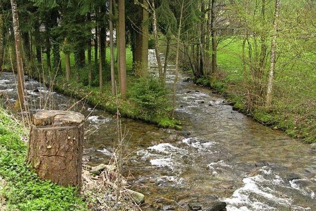 Vereine übernehmen Bachbettreinigung in Münstertal