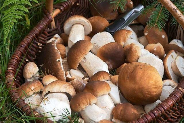 Der Pilz ist eine kulinarische Diva