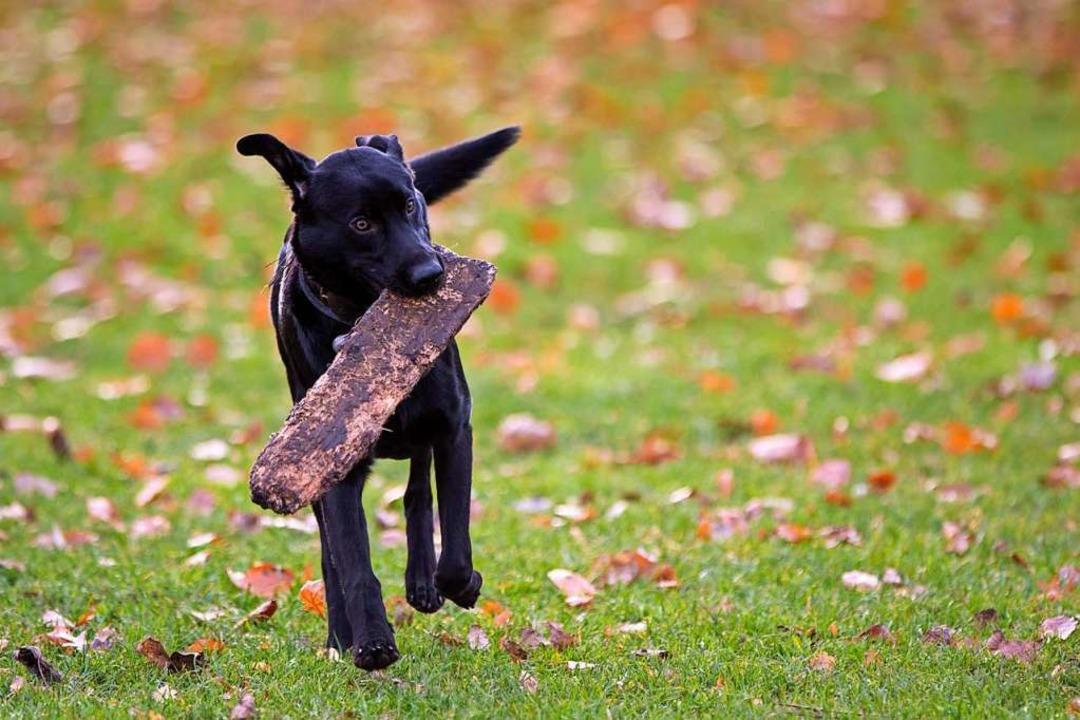 Den Hund ohne Leine laufen lassen &#82...s ist oft nicht ohne Weiteres möglich.  | Foto: Christian Charisius (dpa)
