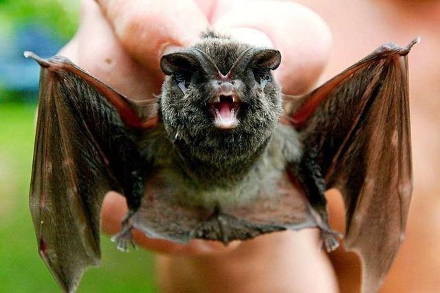 Fledermäuse bekommen ein neues zu Hause