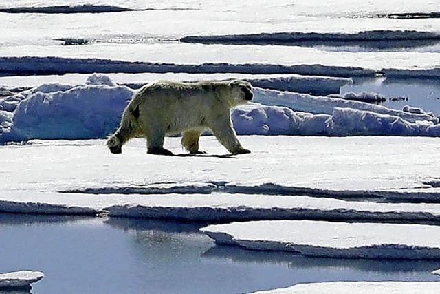 Eine Woche für den Klimaschutz