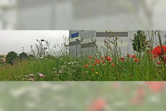 Naturoasen in der Industrielandschaft