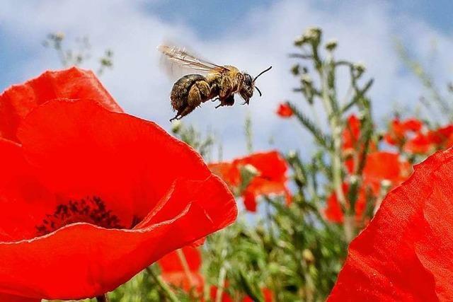 Studie belegt massives Insektensterben im Südwesten