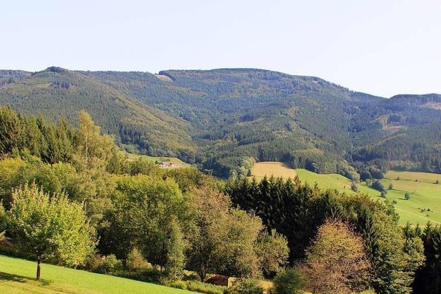 Keine Windkraftanlagen auf dem Gschasikopf – zum Schutz des Auerhuhns