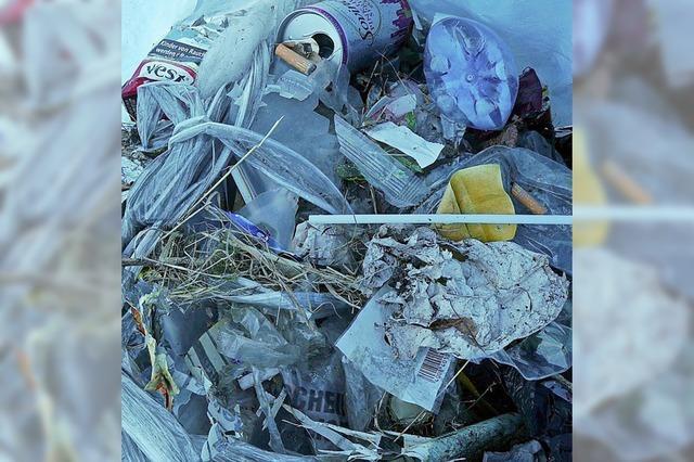 Am Rhein entlang sackweise Müll