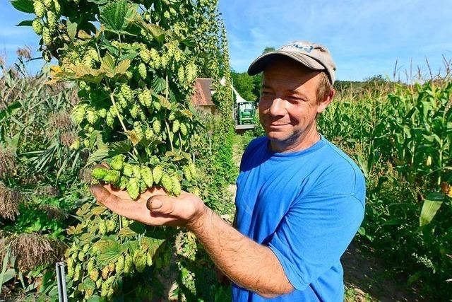 Opfinger Landwirt baut Hopfen an und sucht noch Mitstreiter