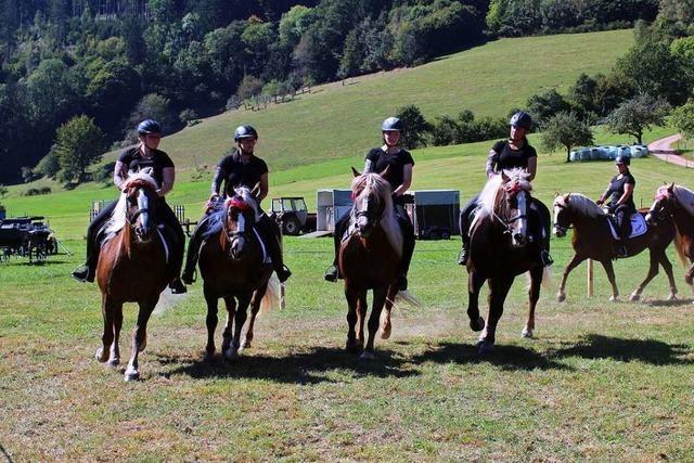 Wo das Herz für Pferde höher schlägt: Reit- und Fahrfest in Prechtal