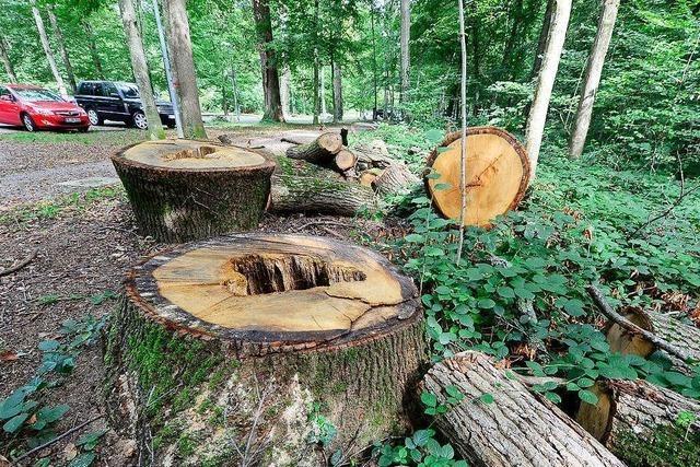 Freiburgs OB Martin Horn stoppt Fällung der 190 Bäume am Keidel-Bad
