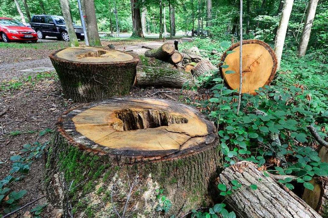 Im Mooswald am Keidel-Bad: Morsche Bäume sind schon weg  | Foto: Ingo Schneider