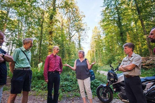 Wie kann der Wald in Lörrach erhalten werden?