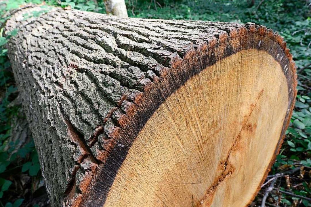 Sind die Bäume zu retten?  | Foto: Ingo Schneider