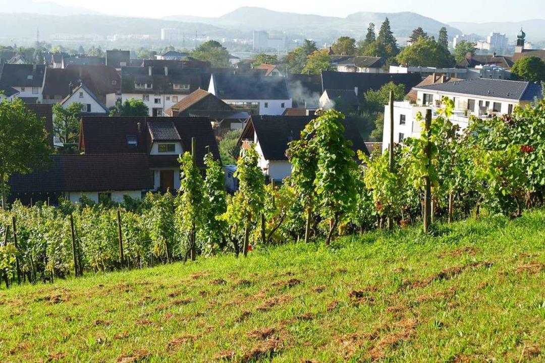 Herten als größter Ortsteil von Rheinf...en Dorfkern mit modernen Wohngebieten.  | Foto: Ingrid Böhm-Jacob