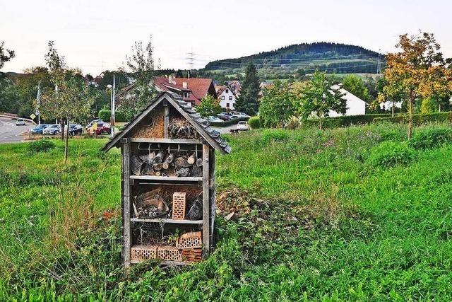 Wollbacher Ortschaftsrat will keine Bienenwiese schaffen