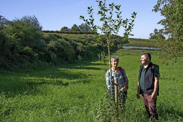 Alte Baumsorten auf Bugginger Wiesen
