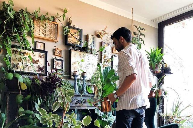 Der trendige Dschungel Daheim: Wieso Zimmerpflanzen plötzlich cool sind
