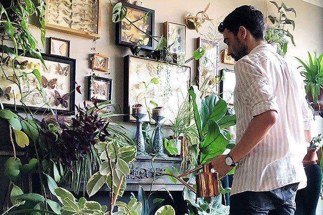 Dschungel Daheim: Wieso Zimmerpflanzen plötzlich cool sind