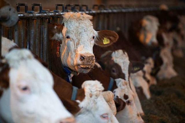Landtags-Grüne wollen Emissionen aus Rinderhaltung reduzieren