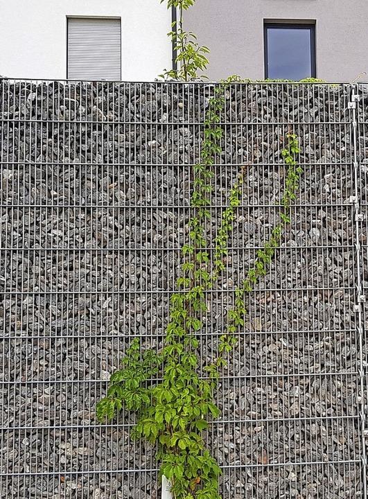 Gabionenwände dienen als Sichtschutz im Baugebiet Jägeracker.  | Foto: Gerhard Walser
