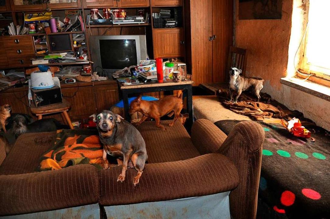 Viele Tiere, zum Teil krank und verwah...n sich zum Teil erschütternde Bilder.   | Foto: J. S. Pfeifer (dpa)