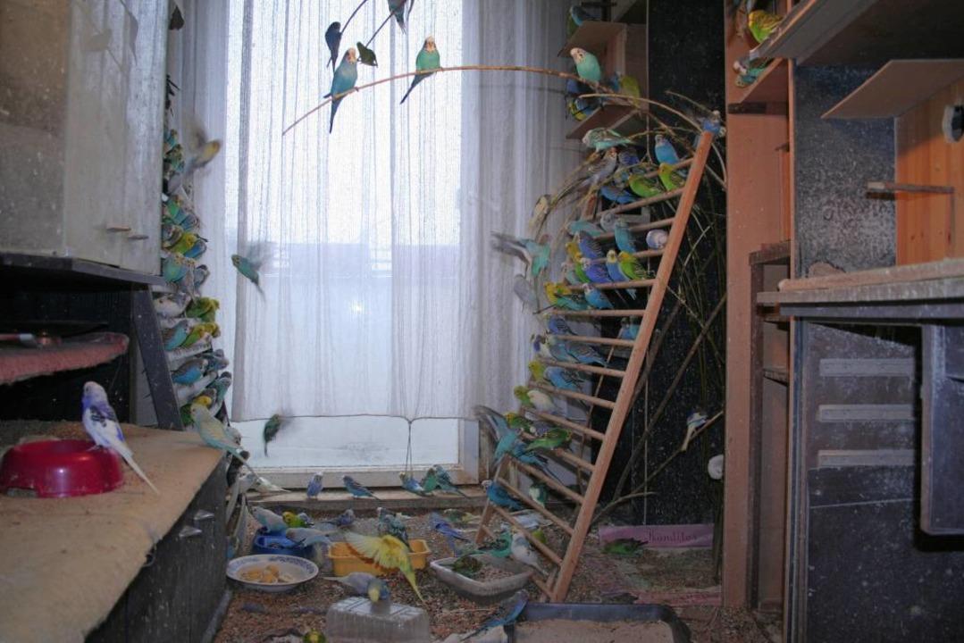 Keine Voliere, sondern eine Wohnung: W... ein klarer Fall von Animal Hoarding.   | Foto: J. S. Pfeifer (dpa)