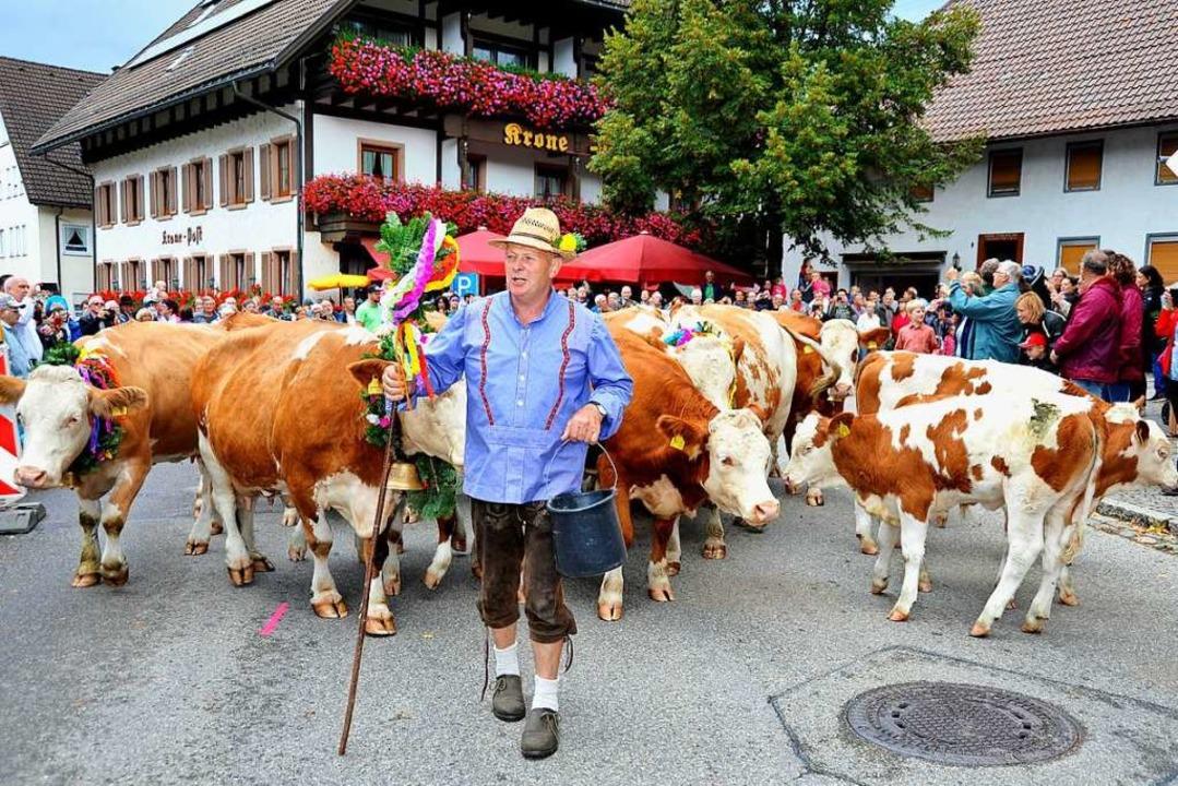 Prächtig dekorierte Kühe und eine Baue...Sonntag beim Almabtrieb in Simonswald.  | Foto: Horst Dauenhauer