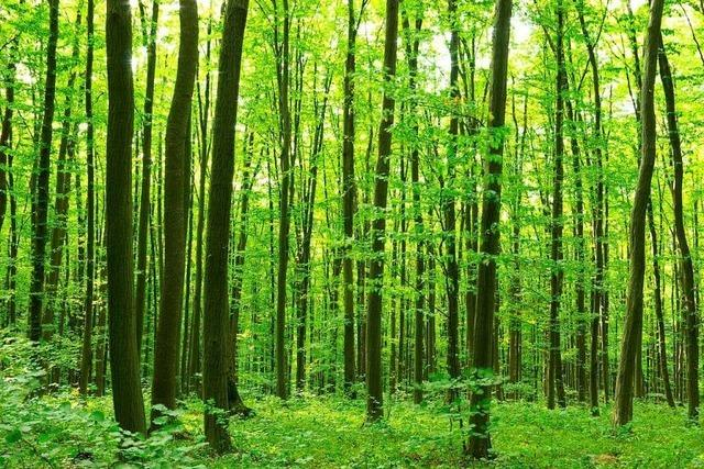 Mehr Bäume, neue Bildungspläne und ein Digitalisierungsministerium