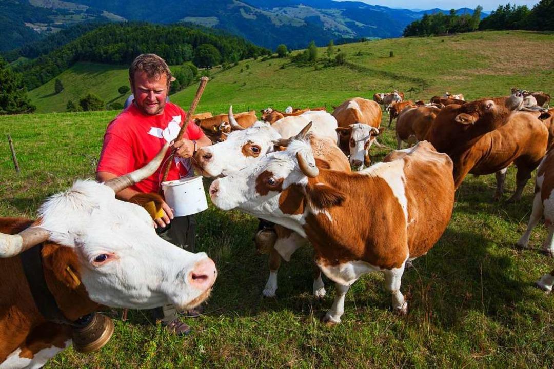 Manfred Knobel bei seinen Rindern am Belchen.  | Foto: Clemens Emmler (Biospährengebiet Schwarzwald)