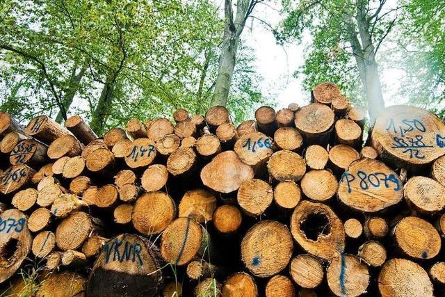 Breisach muss 78 Bäume fällen, weil sie nicht mehr verkehrssicher sind