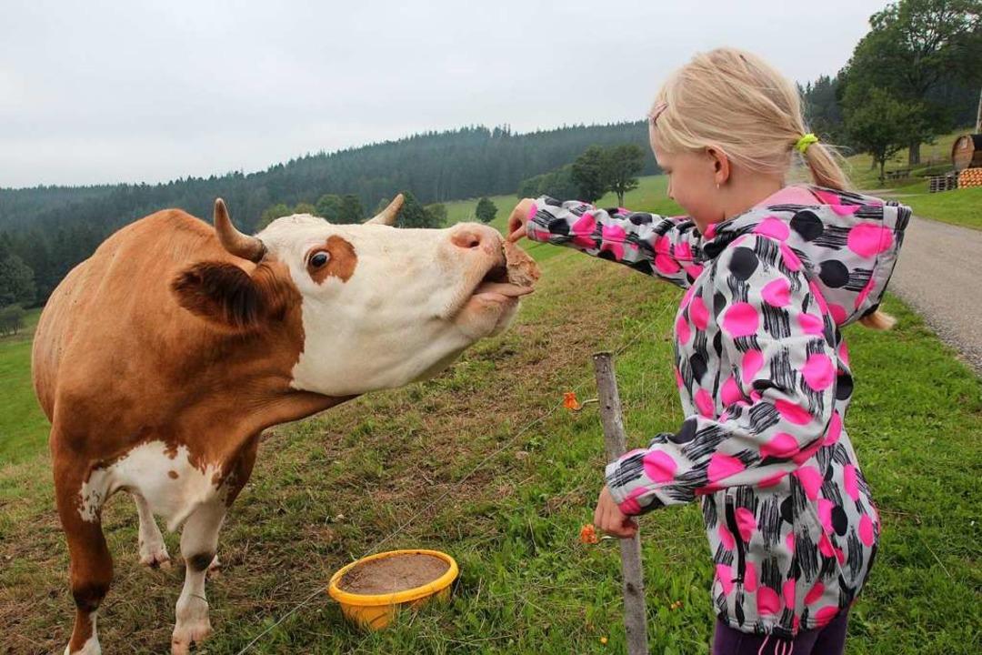 Die siebenjährige Malina füttert eine Kuh auf dem Haberjockelshof.  | Foto: Michael Saurer