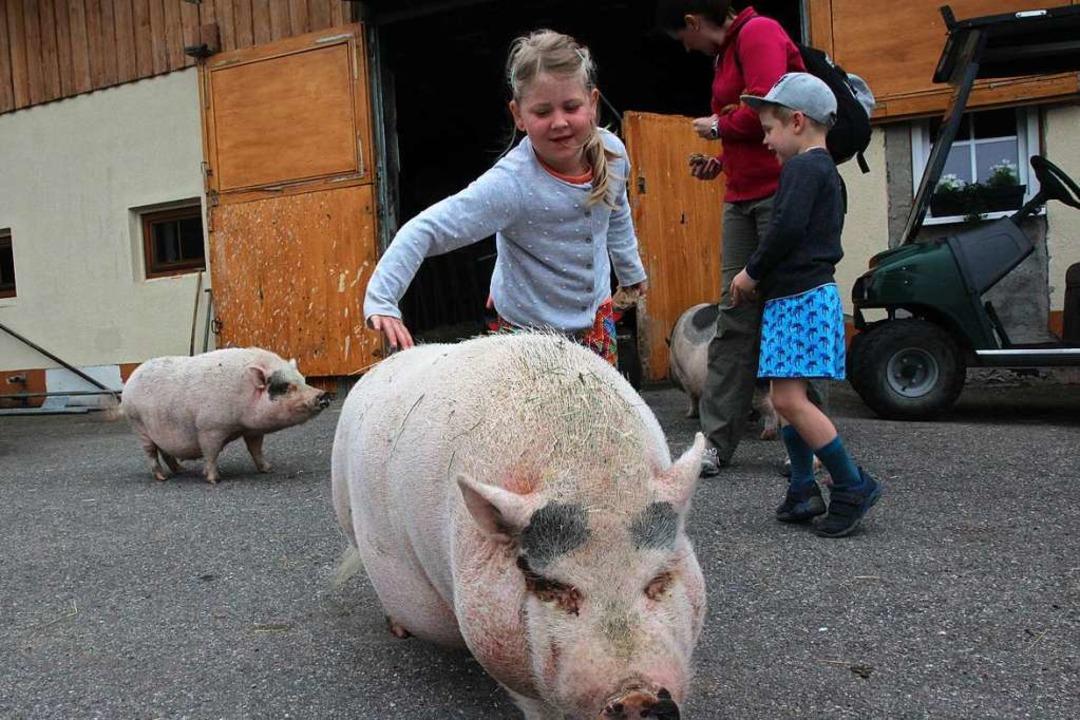 Gehörigen Respekt hatte Claire (6) vor dem großen Schwein  | Foto: Michael Saurer