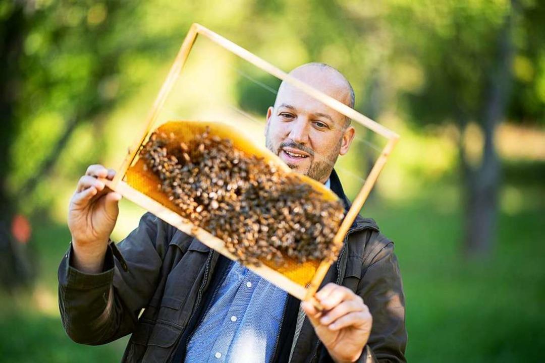 Tobias Miltenberger, Imker und Mitinit... sich ein Rähmchen mit Honigbienen an.  | Foto: Sebastian Gollnow (dpa)