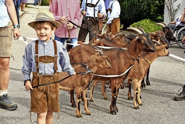 Dirndl, Lederhosen und viele Kühe
