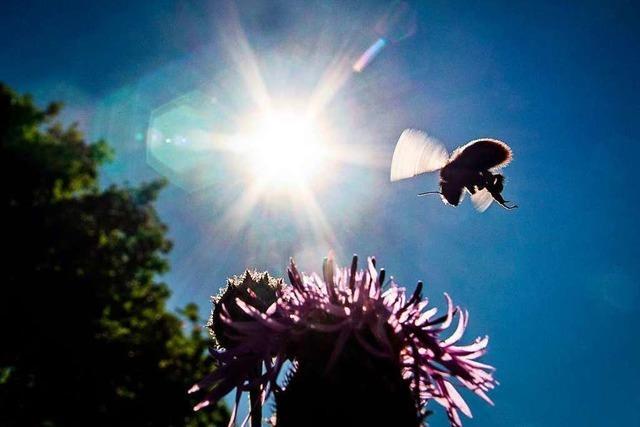 Was man über das Bienen-Volksbegehren wissen sollte