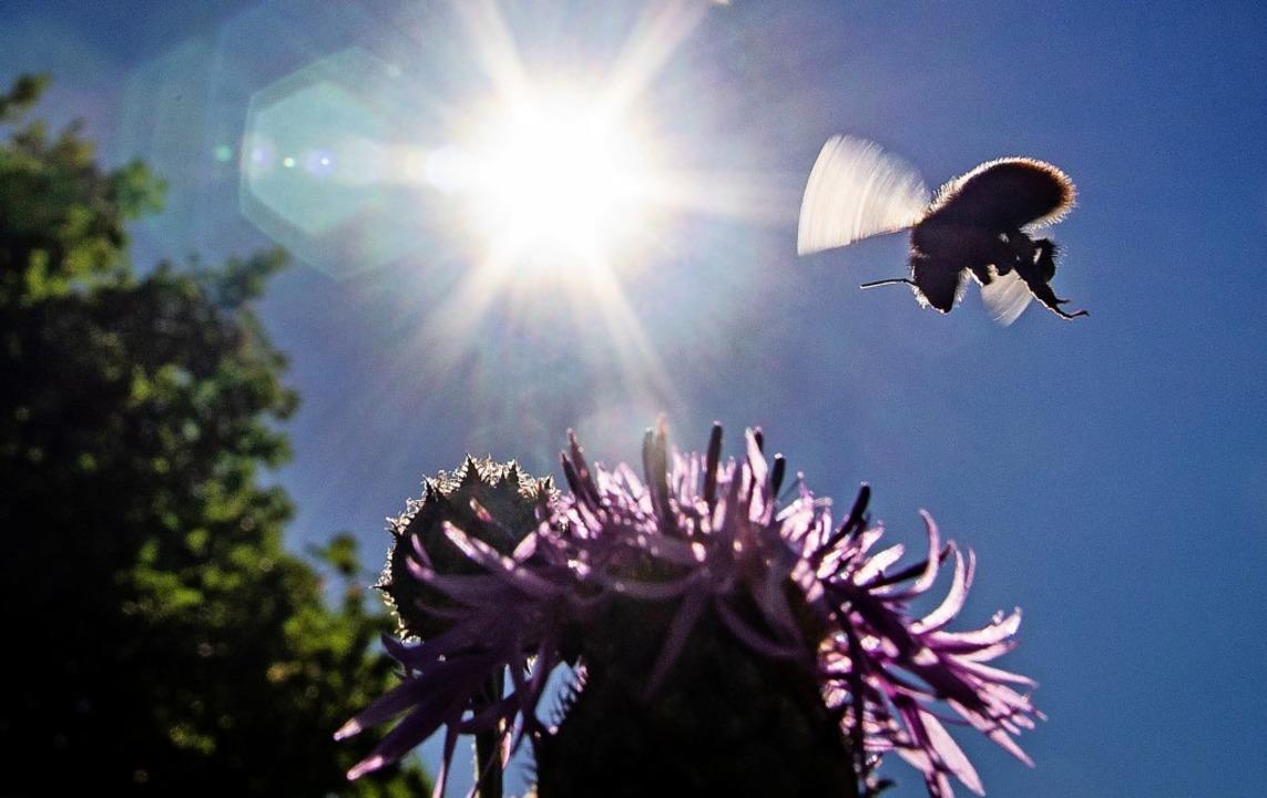 Es geht um sehr viele Unterschriften und  immer weniger Insekten.  | Foto: Frank Rumpenhorst