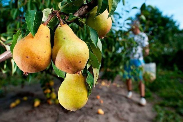 Eine Frau aus dem Markgräflerland experimentiert mit alten Obst- und Gemüsesorten