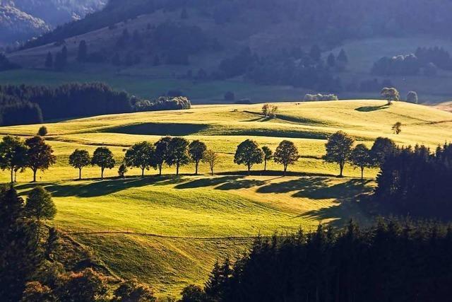 Bei Landwirtschaft, Naturschutz und Tourismus sehen Politiker im Schwarzwald