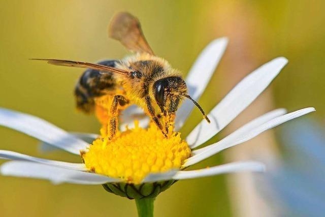 Video: Drei unterschiedliche Positionen zum Bienen-Volksbegehren