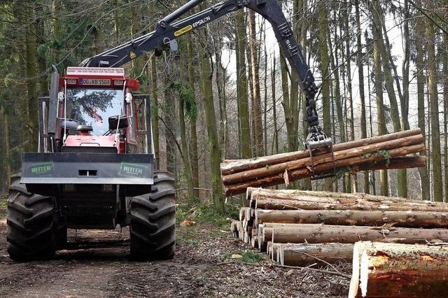 Klimawandel verändert den Wald